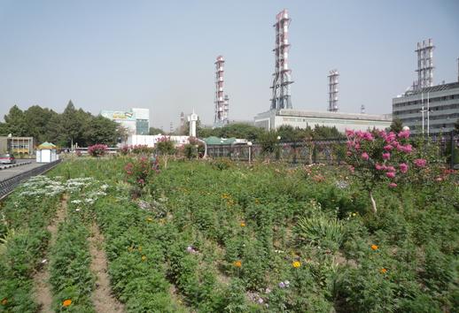 Tajik Mill.png